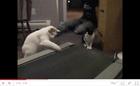 Cats vs Treadmill